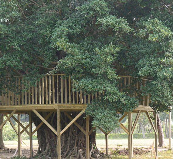 愛樹愛自然我愛八角亭