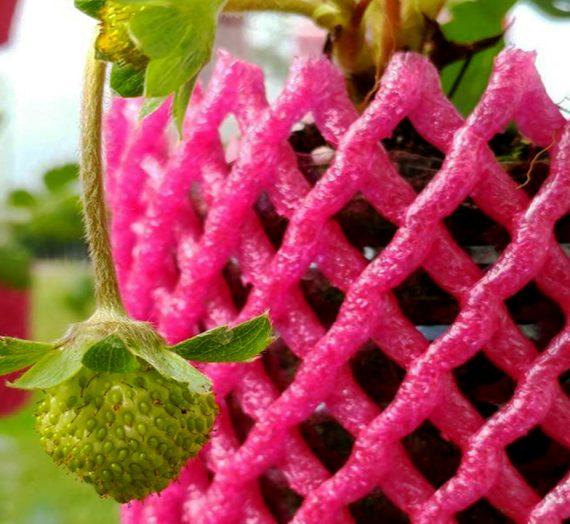 創意種草莓
