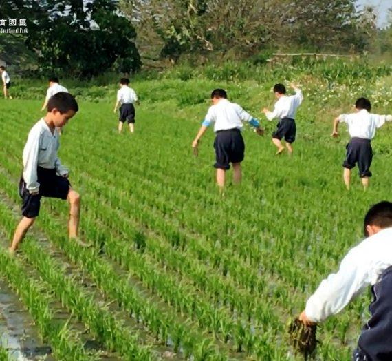 田間踩草樂